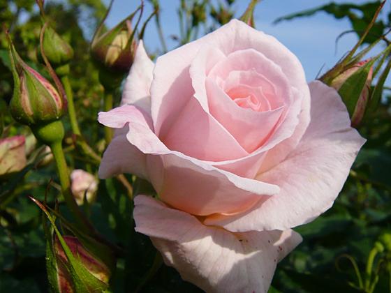 Bridal Pink.jpg