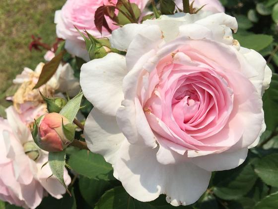 olivia-rose-austin.jpg