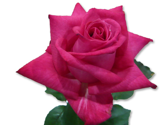 rosy crystal.jpg