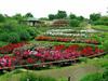 浜寺公園 ばら庭園
