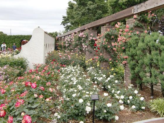 aramaki_rose_garden.jpg