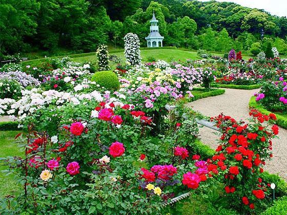 kouzubagateru_rosegarden.jpg