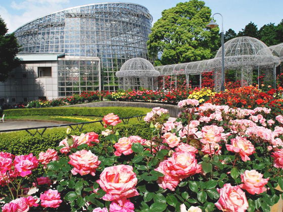 odawara flower park.jpg