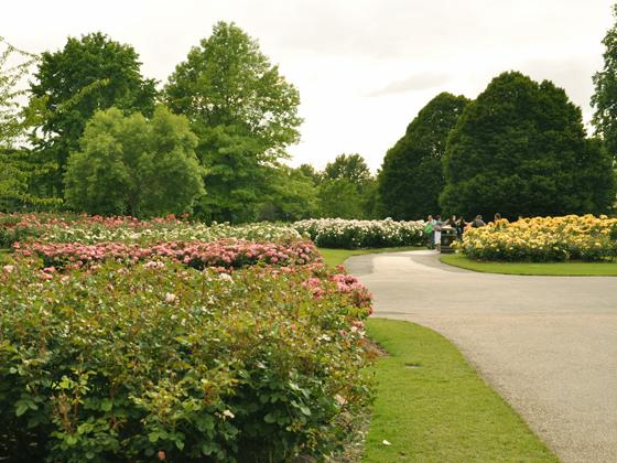 queen mary rose garden.jpg