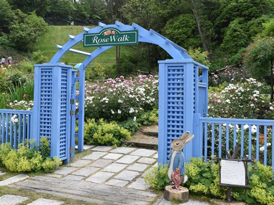 rokkosan rose garden.jpg
