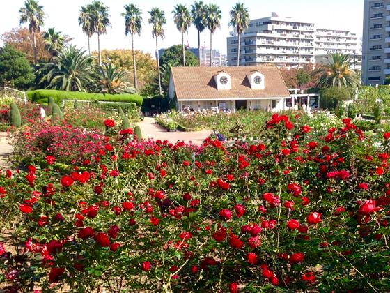 tanitsu_rosegarden.jpg