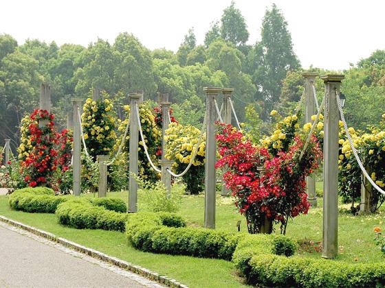 tonboike rose garden.jpg