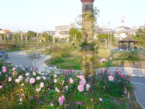 wakasono_rosegarden.jpg