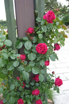 http://www.noibara.net/landscape/img/h3.jpg